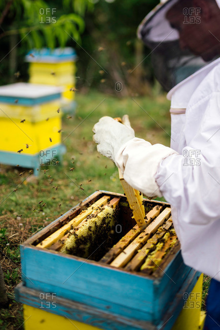 Beekeeper working in outdoor apiary