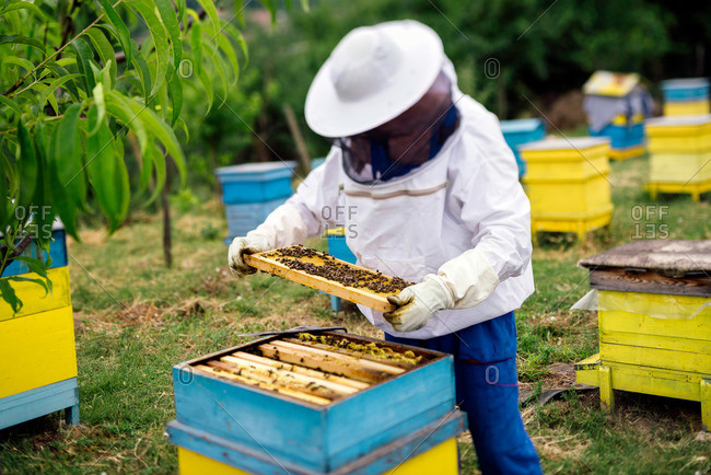 Beekeeper working in his apiary outdoors