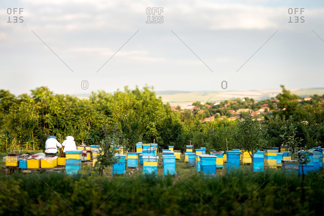 Beekeepers at work in apiary