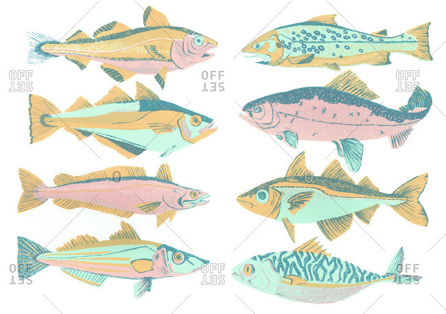 Variety of fish species