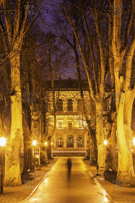 Illuminated tree lined alley, Zagreb