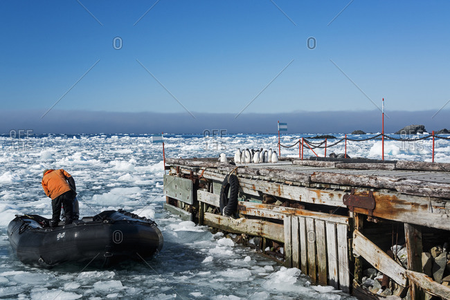 A scientist in rubber boat on the frozen ocean at Esperanza Base with Adelie penguins on the dock
