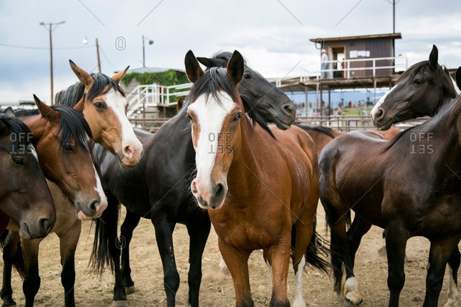 Horses standing in a rodeo arena