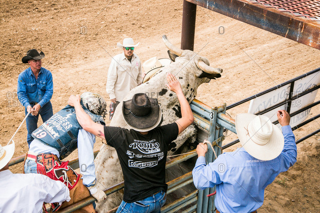 Taos, New Mexico, USA - June 28, 2015: Men assisting a rider mounting a bull