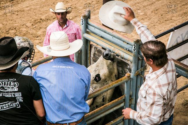 Taos, New Mexico, USA - June 28, 2015: Men preparing a bull and rider