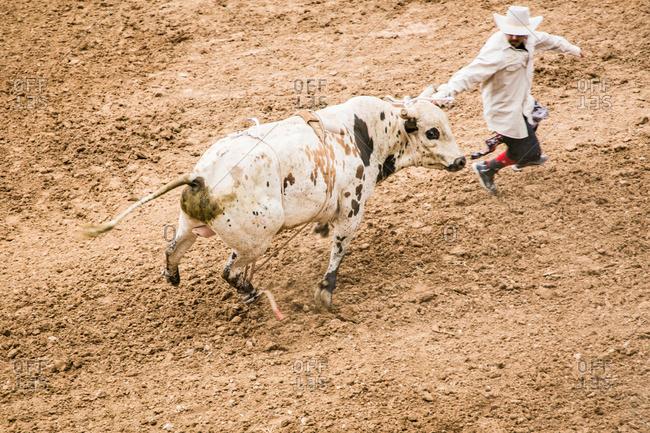 Taos, New Mexico, USA - June 28, 2015: Man roping a rodeo bull