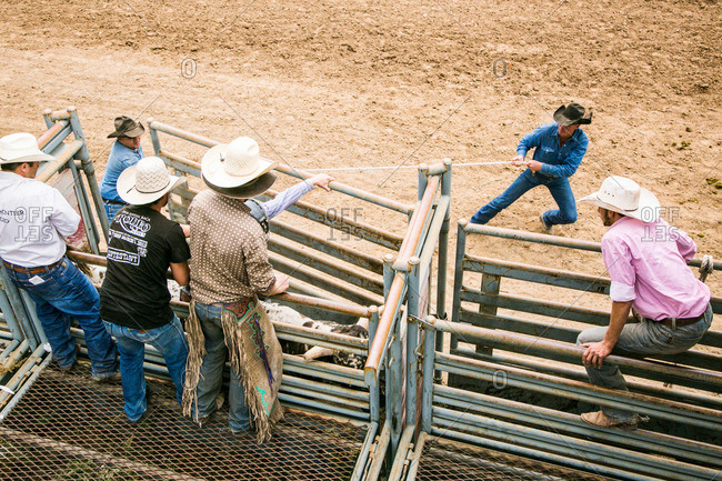 Taos, New Mexico, USA - June 28, 2015: Men releasing a bull and rider from a chute