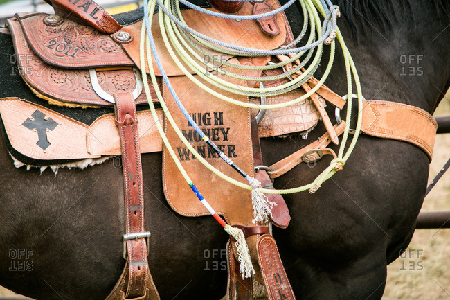 Lasso and saddle on a horse