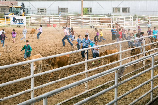 Taos, New Mexico, USA - June 28, 2015: Children chasing calves at a rodeo