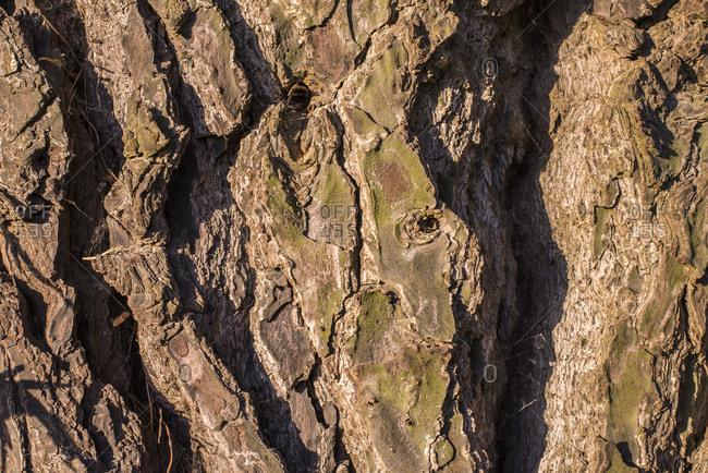 A close up of tree bark