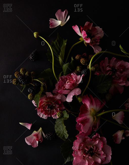 Peonies and blackberries against a black background
