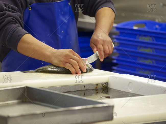 Worker cleaning a fish at a fish market