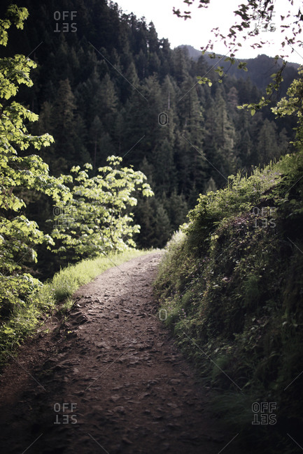 Trail on a forested mountain