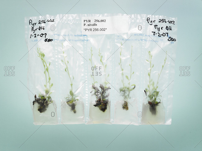 Plant samples in a botany lab