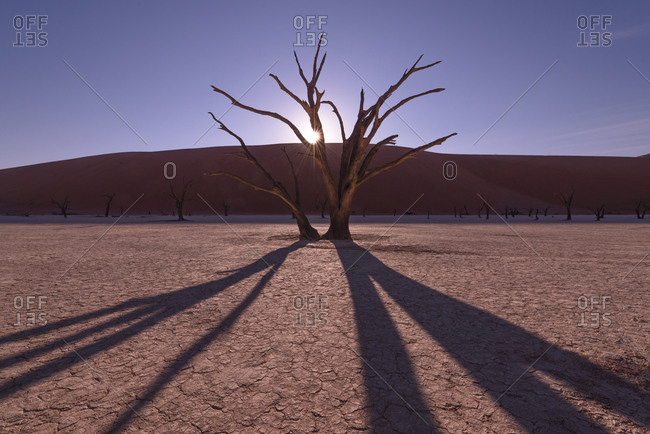 Tree in dry lake in Namibia