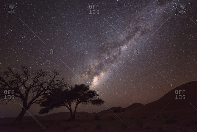 Trees under starry night sky in Namibia