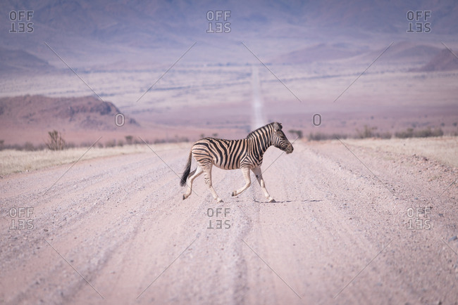 Zebra crossing remote road in Namibia