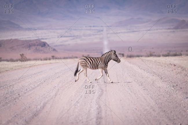 Zebra crossing remote road in Namibia