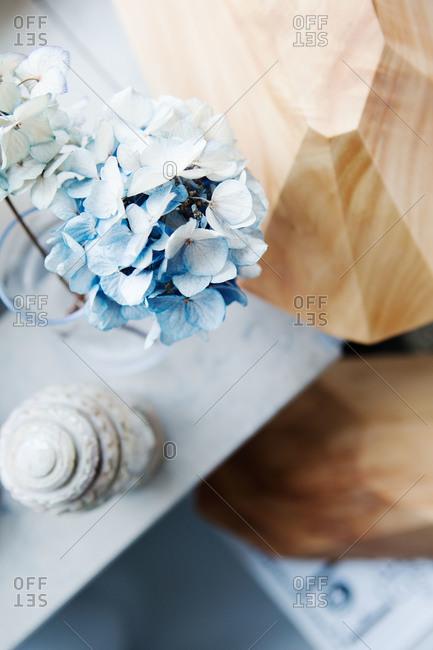 Blue hydrangeas on a table