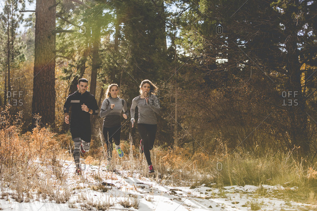 Three people jogging in a forest