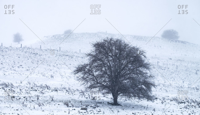 Pasture with tree in a winter snowstorm