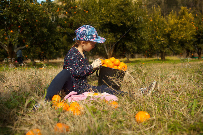 A girl fills bucket in an orange grove