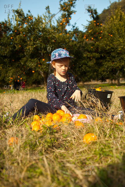 A girl sorts oranges in a grove