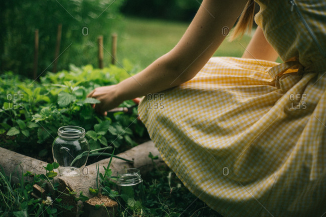 A young woman picks mint from an herb bed
