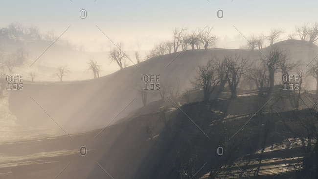 Trees on ridges in a strange, misty landscape