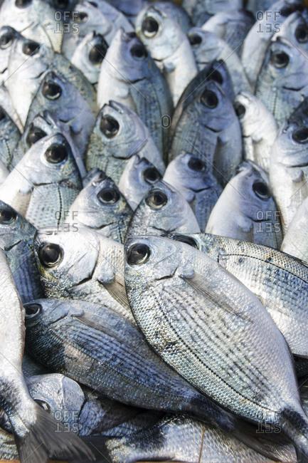 Fresh fish on display - Offset