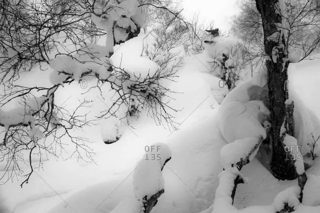 A snowboarding Niseko, Japan