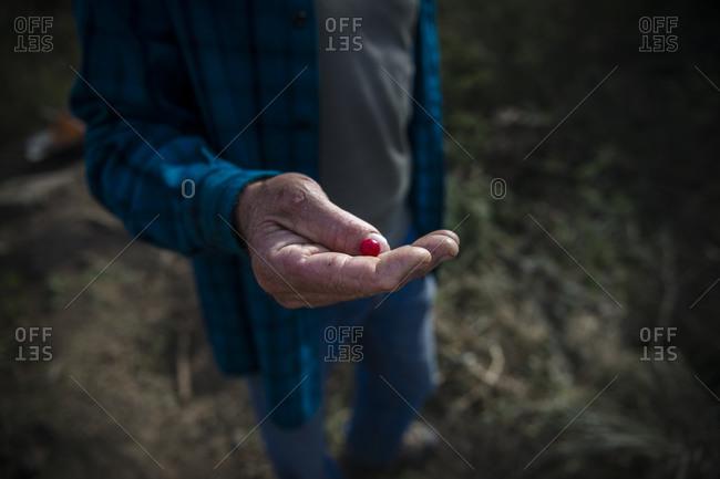 An old Peruvian farmer holds a berry