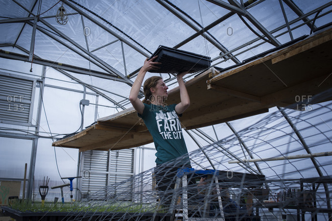 April 2, 2014: A volunteer organizes seedling  at an urban farm in Toronto, Canada