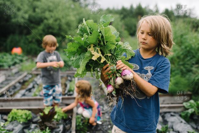 Children harvesting radishes