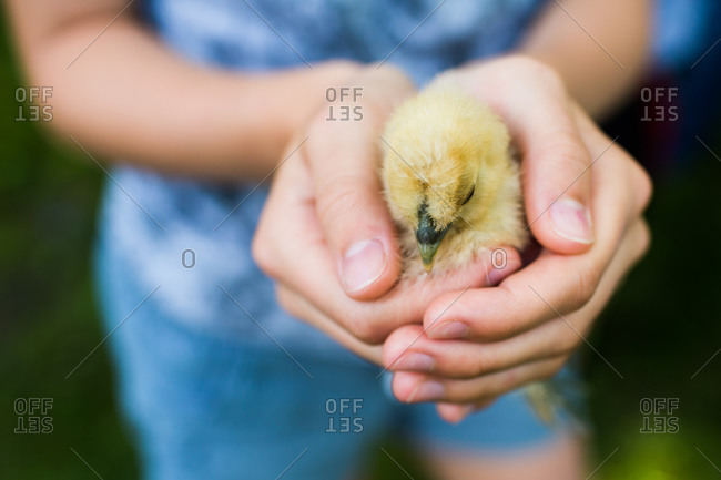 A girl holds a chick in her hand