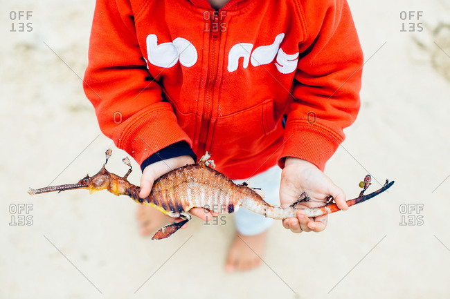 Child holding a seahorse found on a beach