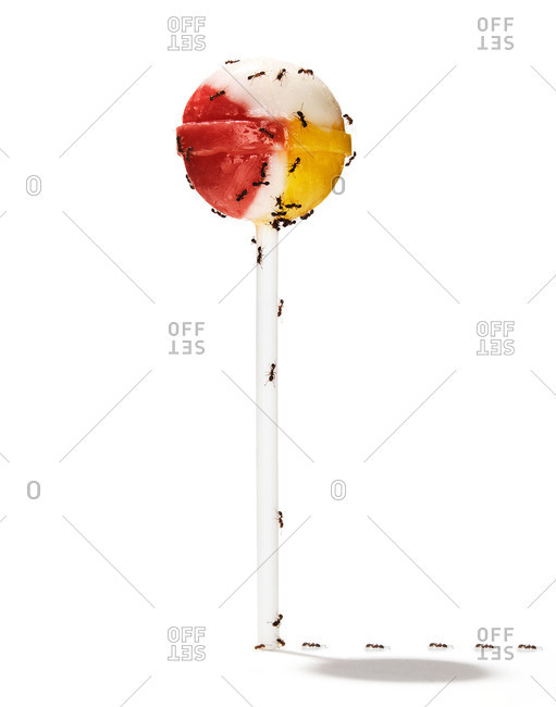 Red and yellow lollipop with ants crawling on it