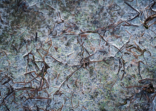 Overhead view of grass covered in ice
