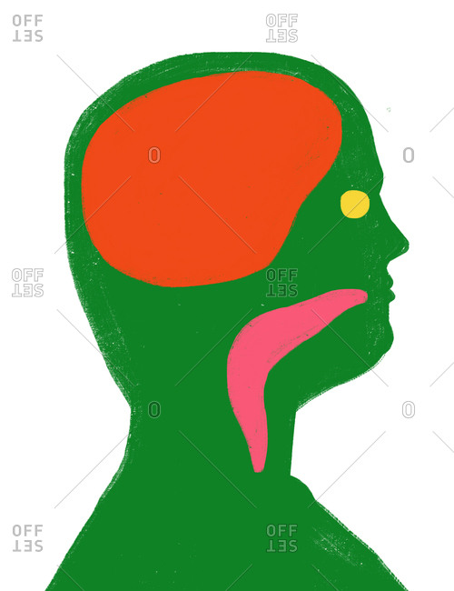 An illustration of the inside of a person's head