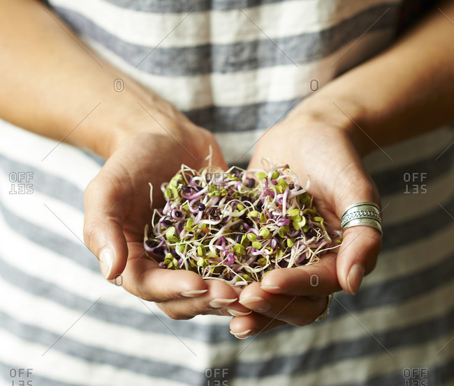 A woman's cupped hands holding alfalfa sprouts