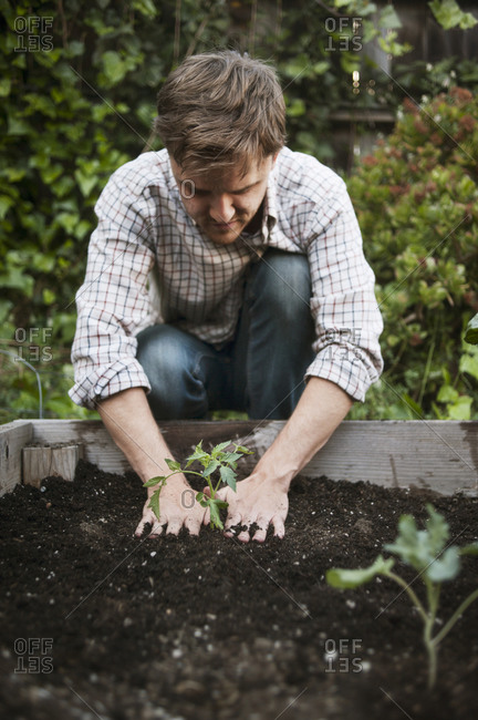Man planting a plant in a raised bed