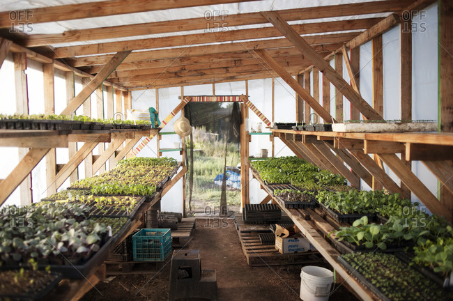 Interior of a greenhouse with seedlings