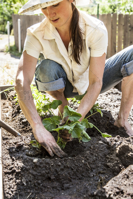 A woman transfers a plant to her garden bed