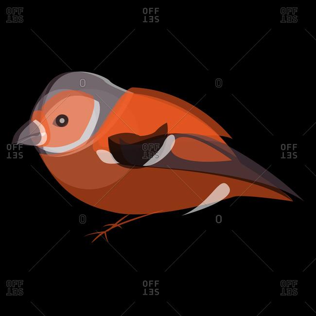 Illustration of an orange bird