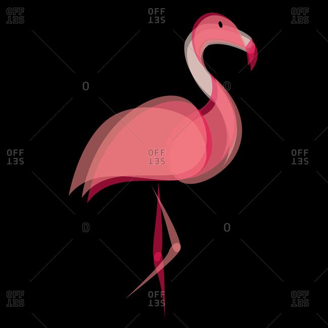 Profile of a pink flamingo