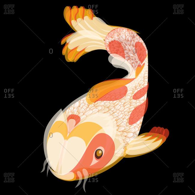Illustration of a catfish