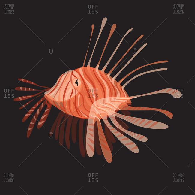 Illustration of a lionfish