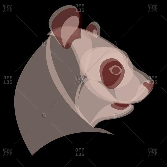 Profile of a panda bear