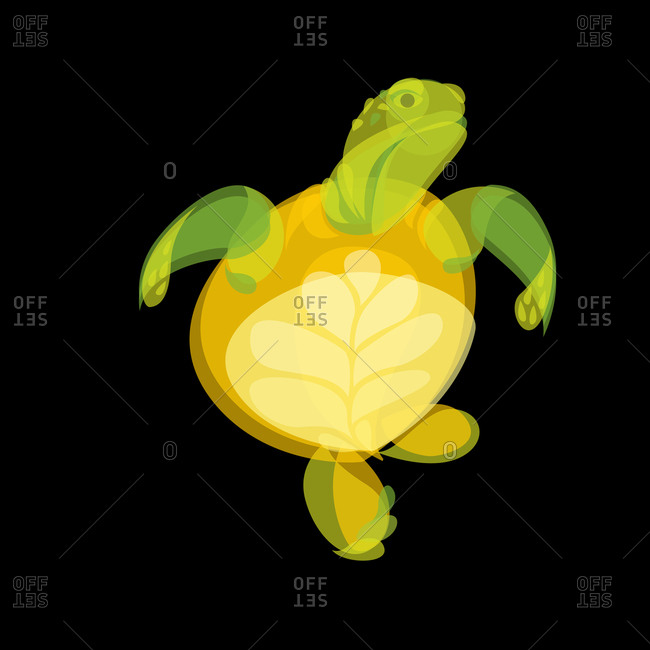 Illustration of a swimming turtle