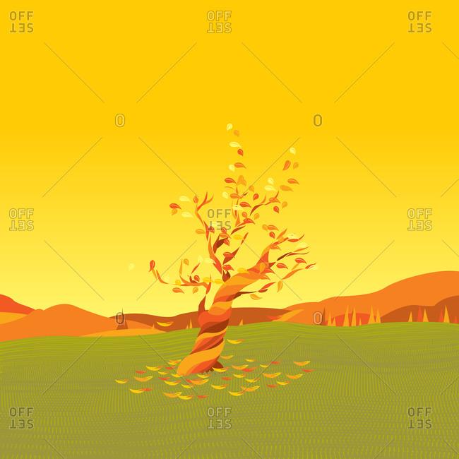Tree in a field in autumn
